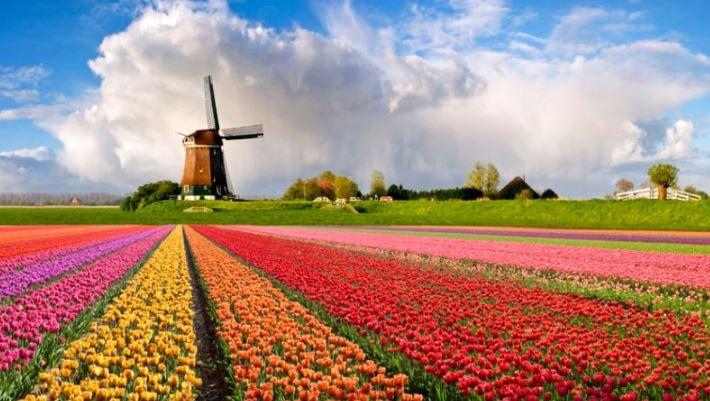 Kebun Bunga Tulip di Jepang