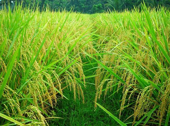 manajemen pertanian