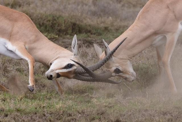 contoh manajemen konflik